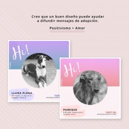 Social Media Layout Galgos